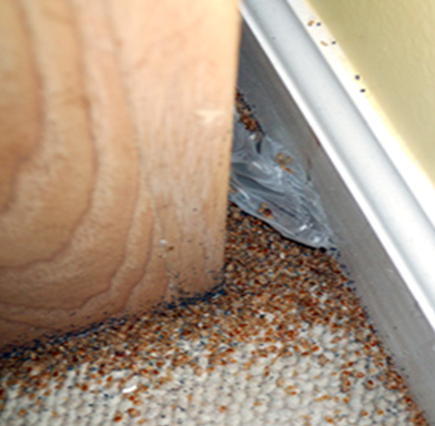 Gric Deq Bed Bug Ipm